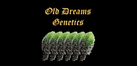 Old Dreams Genetics