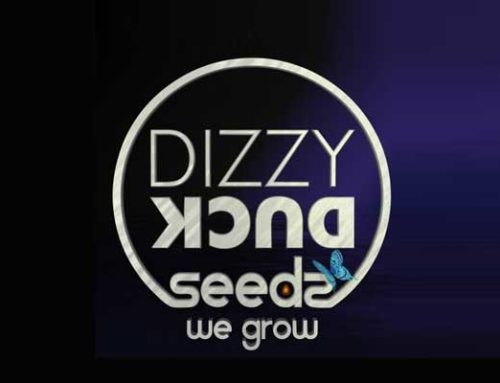 Dizzy Duck Seeds